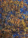 Oktober :: 100_9549