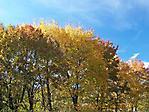 Herbstfarben :: 100_9569