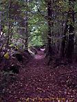 Herbstimpressionen :: 100_9125
