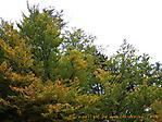 Oktober :: 100_9153