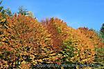 Oktober :: IMG_2664