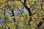 Oktober :: IMG_2460